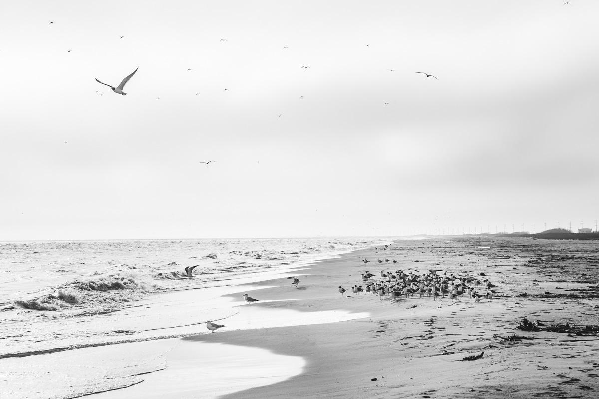 Gulls at Holly Beach, LA