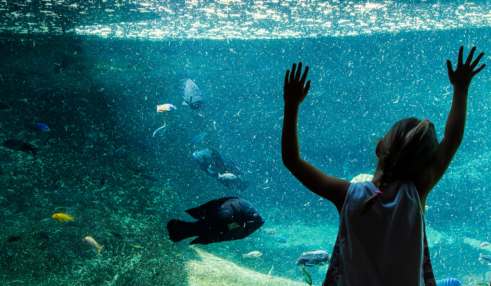 Fish at the San Antonio Zoo