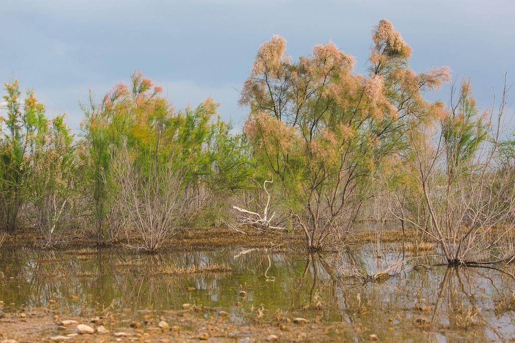 Amistad lake